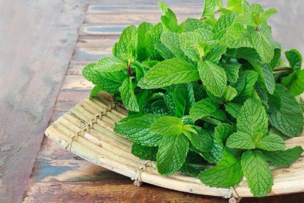 Растения при гипертонии мята повышает или понижает давление