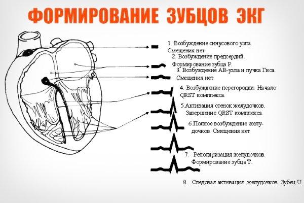 Формирование зубцов ЭКГ
