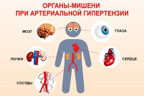 Органы, страдающие при гипертонии