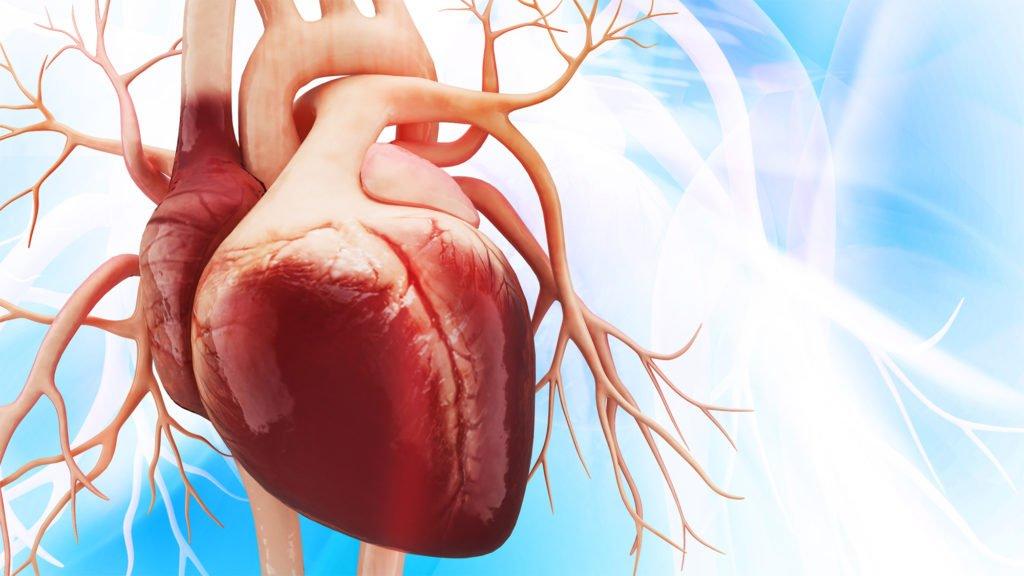 Лечение болезней сердца у овец